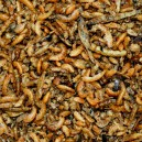 Birdfood Insect 50%