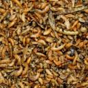 Insect-Pâtée ORLUX PREMIUM (50% d'insectes)